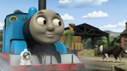 ThomasAndThePigs65