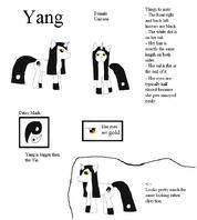 Profile - Yang