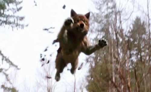 File:New-moon-wolf-jumping.jpg
