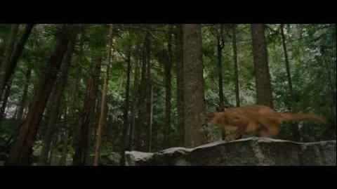 THE TWILIGHT SAGA BREAKING DAWN - PART 2 - Theatrical Trailer