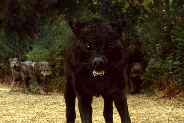File:Dark wolf-1-.jpg