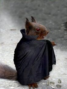 Vampire squirrel