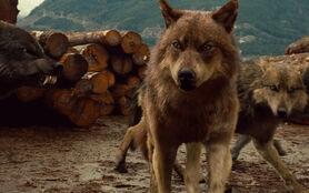 TBD-P1-02 Wolf