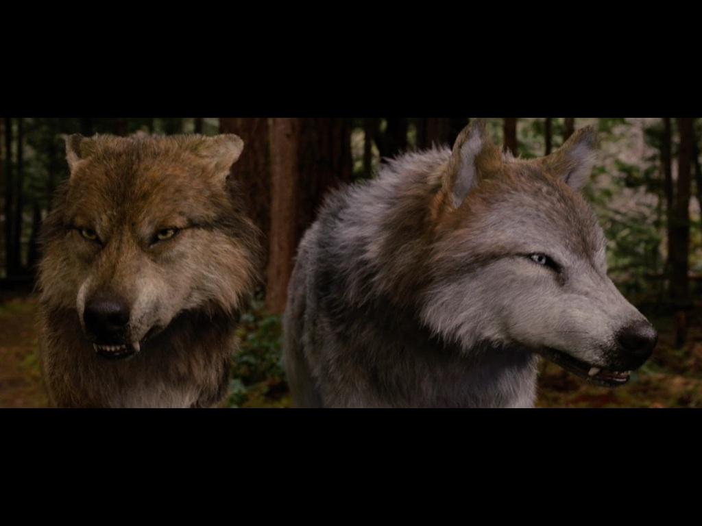 Image - Seth & Leah Clearwater.jpg | Twilight Saga Wiki ... Twilight Wolf Pack Seth