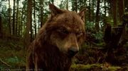 Jacob Black (wolf)