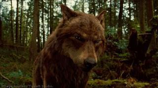 File:Jacob Black (wolf).jpg