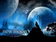 The-twilight-saga-new-moon-twilight-series-4882955-1024-768