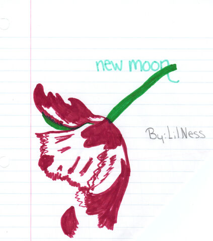 File:Newmoonmyown.jpg