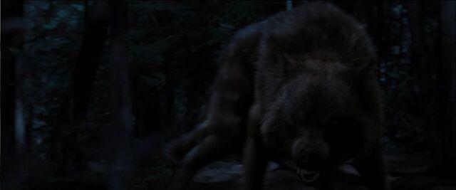 File:Collin-wolf-20015001.jpg