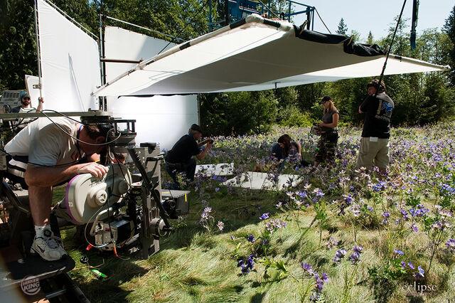 File:Meadow scene.jpg