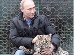 Putinleopard