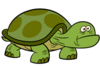 Cool or dumb turtle