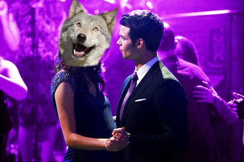 File:Hayley as dog.jpg