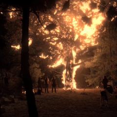 The White Oak Tree burns down.