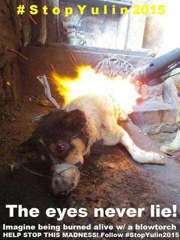 File:Yulin Dog Meat 'Festival.jpg