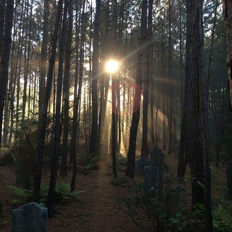 File:Mystic Falls Cemetery 2014-10-20 Ian Somerhalder Instagram.jpg