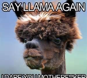File:Llama is not an alpaca.jpg