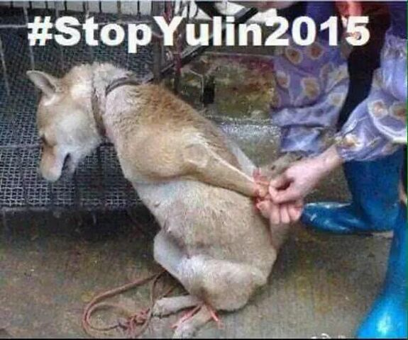 File:Yulin Dog Meat 'Festival((a).jpg
