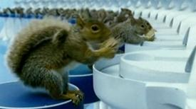 Charlie and the Chocolate Factory (2005) - Clip These Squirrels Are Specially Trained