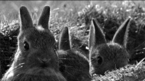 Rabbit A La Berlin (2009) - Open-ended Trailer for Rabbit A La Berlin