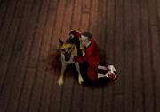 Sheeva the dog