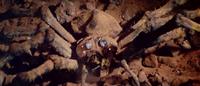 All Monsters Attack - Kumonga appears via stock footage