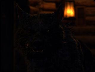 Red Riding Hood - Cesaire as a Werewolf