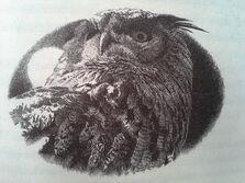 Eostra's eagle owl 2