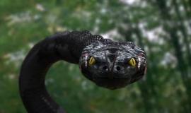 Anacondam