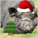 File:ChristmasPigpen.jpg