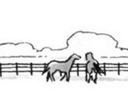 File:Horse 2.JPG