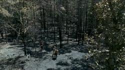AMC 606 Woods