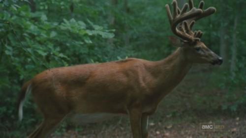 File:Deer Forest.jpg