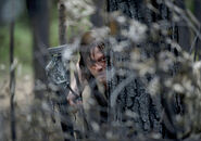 The-walking-dead-season-6-first-look-daryl-reedus-935-1