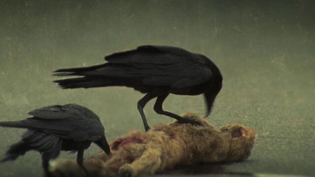 File:Crows.jpg