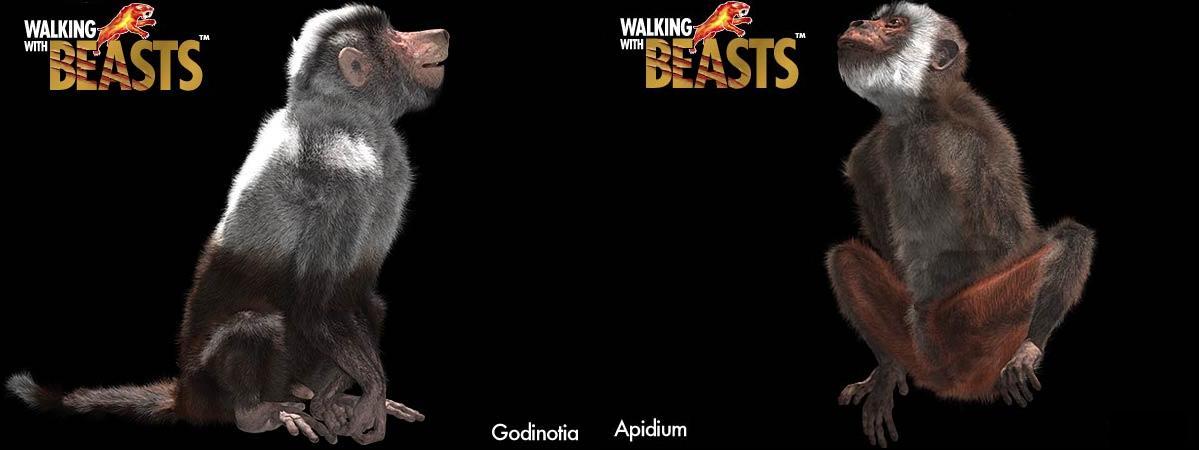 Apidium | Walking With Wikis | Fandom powered by Wikia  Apidium | Walki...