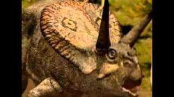Torosaurus lock horns. Torosaurus bloqueo de cuernos