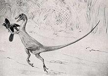Ornitholestes charles knight