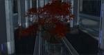 CBautumnmapletree.png