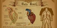 Oolitic Kidney