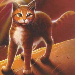 Warrior Cats Blossomkit Nederlandse Warrior Ca...