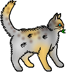 File:Dappledfeather.Medicane cat.png
