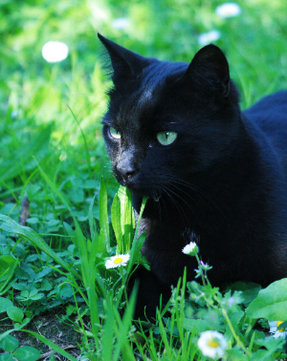 Blackwing.life
