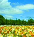 File:SpringMeadow.jpg
