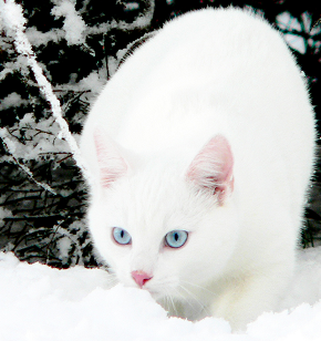 File:Frostblossom.life.png