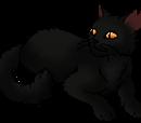 Blackclaw