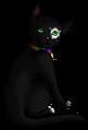Brandy.kittypet