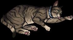 Henry.kittypet