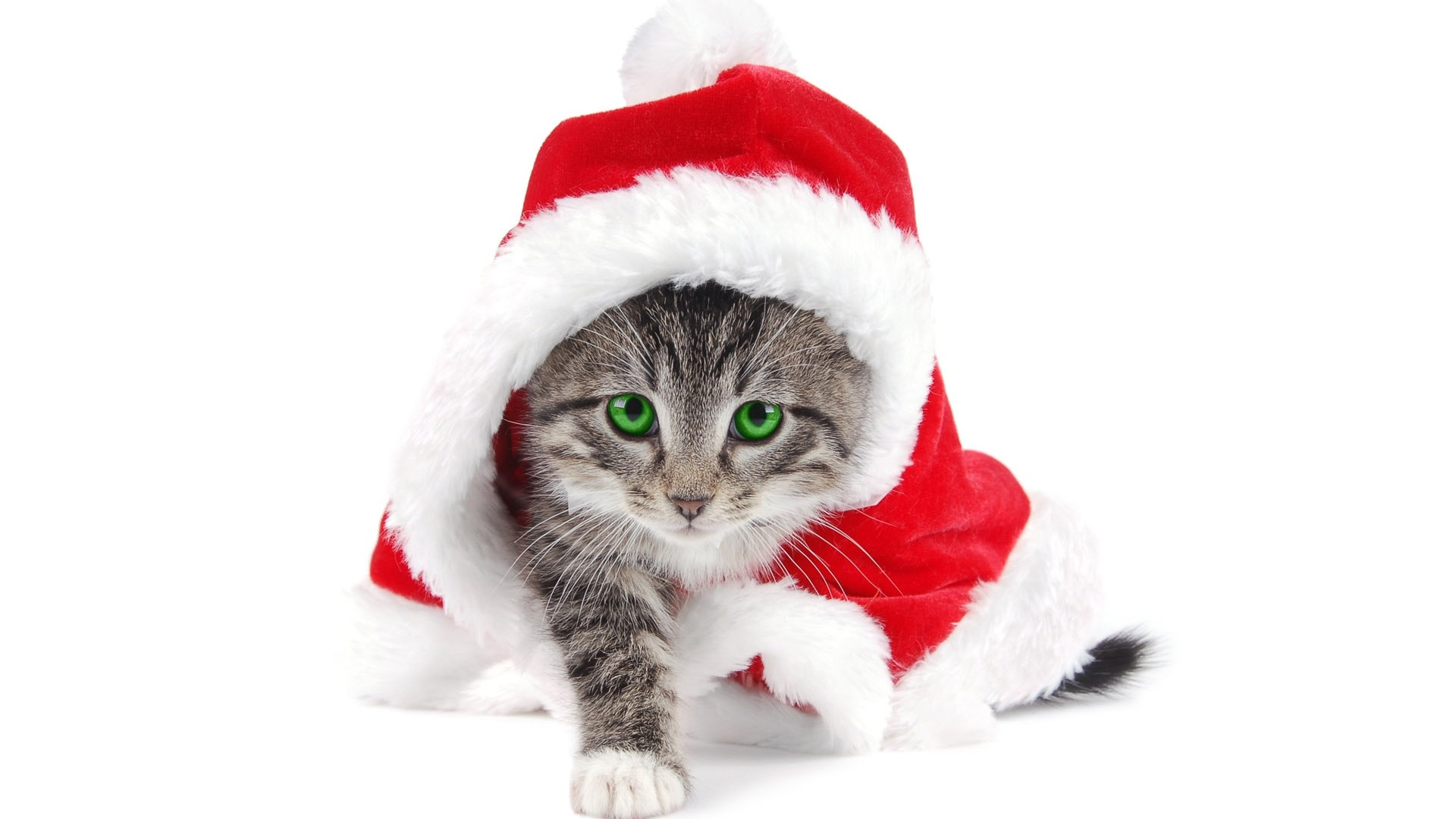 Kittens Wearing Christmas Hats File:wearing Christmas Hats