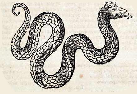 Schlangenkönig